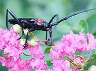 轻巧灵敏的昆虫山水牛图片