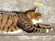 唯美猫咪漫画图片逗趣搞怪