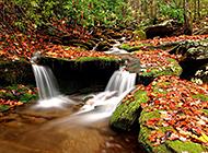 山间清澈小溪唯美风景