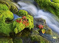 绿意生机盎然的自然风景图片