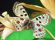 唯美花蝴蝶浪漫自然美景高清大图