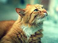 卖萌猫咪图片宠物可爱表情特写
