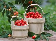 红嫩的樱桃诱惑迷人