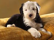 猫咪狗狗家养宠物动物图片