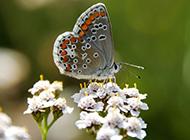 蝴蝶昆虫图片大全高清摄影特写