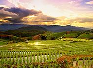 梯田田园美丽风光图片