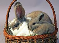 兔子狗狗家养小宠物图片合集