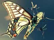生动精灵蝴蝶唯美高清拍摄