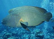 美丽石斑鱼海底世界海洋生物图片