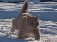 雪地里可爱的猫咪高清桌面壁纸
