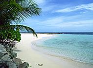 沙滩椰林唯美海景图片