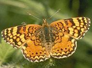 漂亮美丽的花蝴蝶近距摄影图片