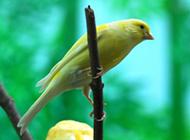 长春白玉鸟羽毛靓丽图片