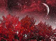 浪漫红树林静谧星空风景图片