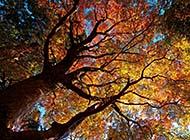 秋日唯美森林清新风景高清美图集