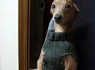 优雅端庄的狗狗