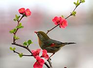 相思鸟花园嬉戏图片欣赏
