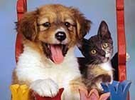 相濡以沫的小狗和小猫高清壁纸