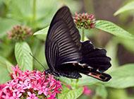 美丽的花蝴蝶高清动物图片