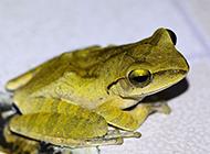 小树蛙唯美摄影图片