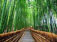 夏天里幽静竹林风景图片