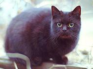 可爱小奶猫撒欢逗趣萌图精选