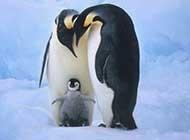 温馨有爱的动物母子情高清组图