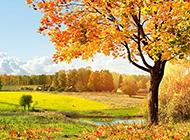 秋天唯美树林风景图片欣赏