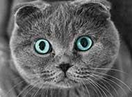 毛茸茸慵懒的猫咪高清组图