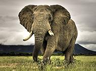 憨态可掬的大象高清图片