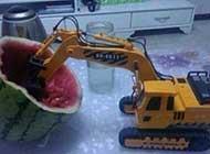 新品种甜瓜新疗效