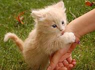 可爱的小萌猫图片高清素材