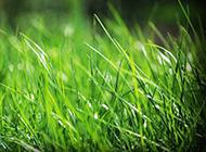 清新草地背景图片素材