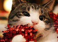 萌宠图片猫咪可爱表情抓拍