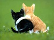 小猫买萌图片素材精选可爱逗趣