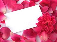 粉色玫瑰花花瓣背景素材