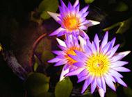 颜色绚丽的野花摄影图片