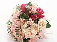美丽动人的玫瑰花球