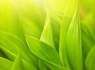 绿叶植物室内图片素材