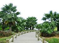 绿道的棕榈树图片欣赏