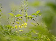 刚发育成熟的野花图片