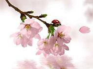浪漫樱花图片唯美背景素材