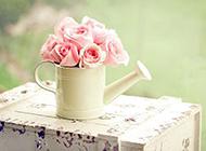 唯美小清新粉色玫瑰花背景下载