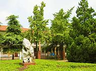 校园里的绿色树木摄影图片