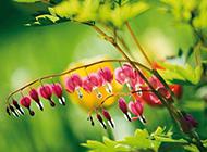 雨中铃兰花图片大全绿色植物摄影