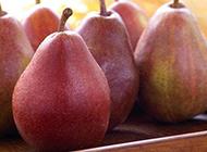 果个极大的红香梨图片