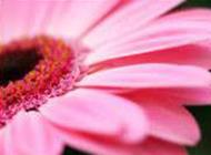 室外开花植物图片精选高清壁纸