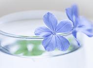 淡紫色小清新花朵壁纸图片