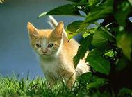 小猫咪卖萌图片精选分享