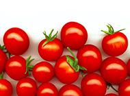 创意番茄植物图片